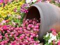 Как украсить сад летом: растения на фасадах
