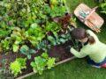 Самые неприхотливые овощи итравы для начинающего огородника