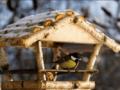 Как сделать кормушки для птиц из дерева своими руками